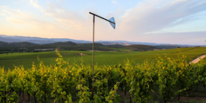 Wind machine in vineyard