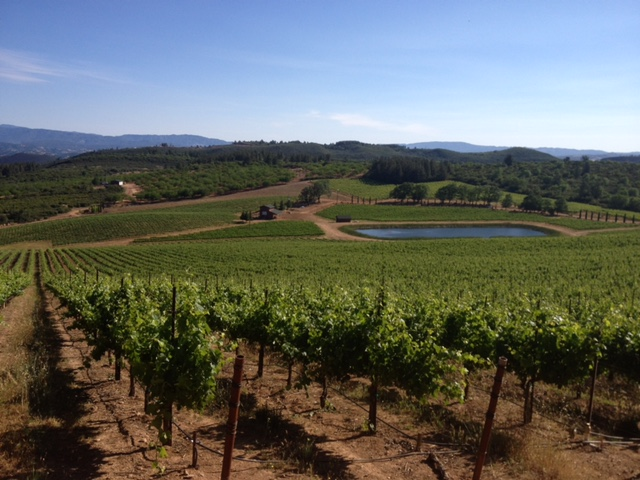 Cougar Ridge Ranch, Bartolucci Vineyards